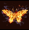 fiery butterfly vector image
