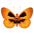 Halloween butterfly vector image