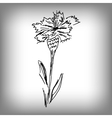 cornflower by hand vector image