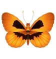 Halloween butterfly vector image