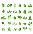Set of green leaves design elements for you design vector image
