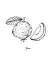 hand drawn of fresh guava on white background vector image