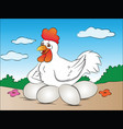 hen with eggs vector image