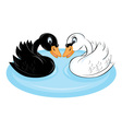 two swans vector image