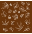 Autumnal fallen leaves and acorns chalk sketches vector image