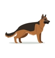 German Shepherd or Alsatian Wolf Dog Isolated vector image