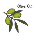 olive oil design element for logo label emblem vector image