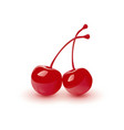 cocktail cherry isolated vector image