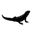 Bearded dragon vector image