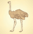 Sketch cute ostrich in vintage style vector image