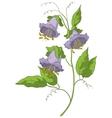 Flower kobe vector image