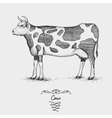 cow engraved hand drawn in vector image