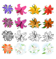 Lilies set vector image