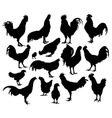 Rooster and Chicken Activity Silhouettes vector image