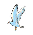 flying seagull hand drawn vector image