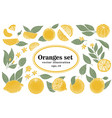 set of hand drawn citrus whole and vector image