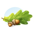 image on white background autumn acorns with green vector image vector image