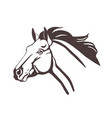 horse head drawn with contour lines isolated on vector image