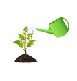 Money plant with watering can vector image vector image