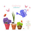 design banner with collection of delicious herbs vector image