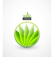 Green leaves spring concept vector image
