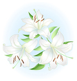 White lilies bouquet vector image
