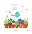 design template with set of different herbs vector image