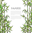 framewith hand drawn bamboo branches on white vector image