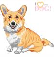 dog Pembroke Welsh corgi smiling vector image vector image