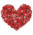heart of red poppy flowers isolated on white vector image