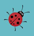 cute ladybug flat vector image