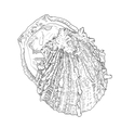 Hand drawn oyster with outline and fill Sea food vector image