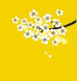 white sakura blossom branch on sunny yellow vector image
