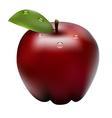 apple1 vector image