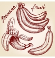 Bananas fruit set hand drawn llustration vector image