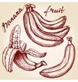 Bananas fruit set hand drawn llustration vector image