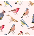 Colorful songbirds seamless vector image