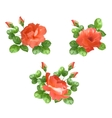 Flower rose collection vector image vector image