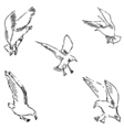 Seagulls sketch Pencil drawing by hand vector image