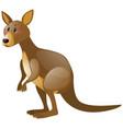 Wild kangaroo on white background vector image