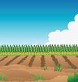 Crop field corn vector image