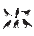 Birds Silhouettes Isolated on White vector image