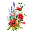 Watercolor Summer Garden Blooming Poppies Flower vector image