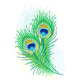 Peacock watercolor style vector image