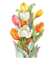 Watercolor Summer Garden Blooming Tulips Flower on vector image