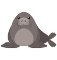 seal with round body vector image