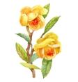 Watercolor Summer Garden Blooming Jasmine Flower vector image