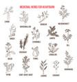 Best herbal remedies for heartburn vector image