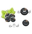 Black currant berry cartoon character vector image