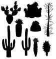 silhouette cactus and tree vector image